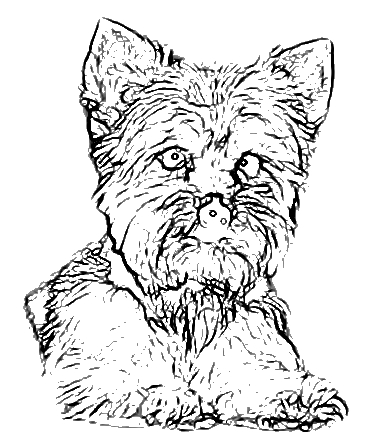 yourkie doags coloring pages | Complete Canine Training -Dog&Puppy Training The Woodlands ...